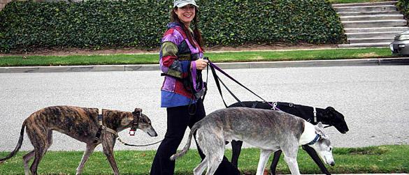 Dog Walking Equipment