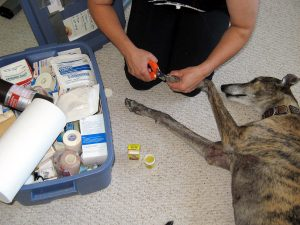 Person cutting dog's nails next to large first aid kit