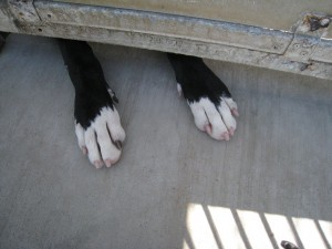 Paws Reaching Out Under Cage